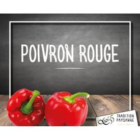 Poivron ROUGE (500g)