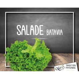 Salade Batavia (l'unité)