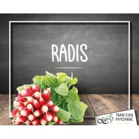 Radis Français (la botte)