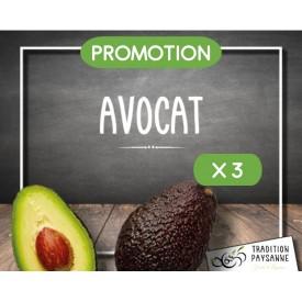 Promo Avocat (3 pièces)