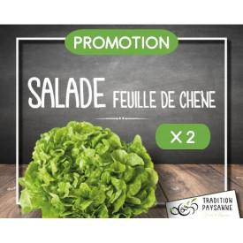 Salade feuille de chêne X 2