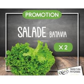 Salade batavia X 2