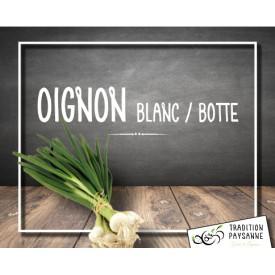 Oignon Blanc (botte)