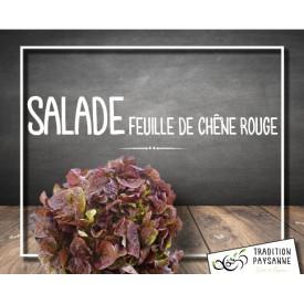 Salade chêne rouge (l'unité)